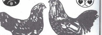 Gründung des Geflügelvereins Westerwiehe